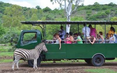 jungle-trekking-mauritius