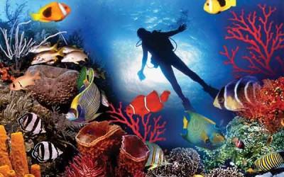 snorkeling-maldives